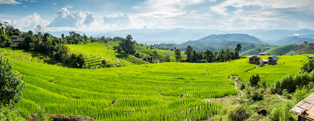 field rice in thailand