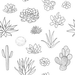 Succulent seamless pattern, hand drawn vector illustration. outline sketch chalk style
