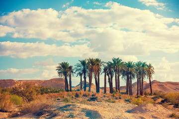 Oasis in a desert. Grove of palm trees in the desert. Wilderness Wall mural