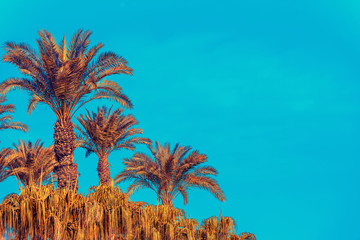 Retro landscape with palm trees against blue sky in a dessert