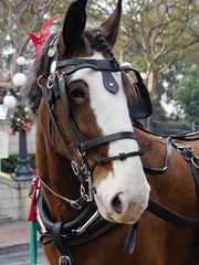 Close up of a horse's head straps and reins at a park.
