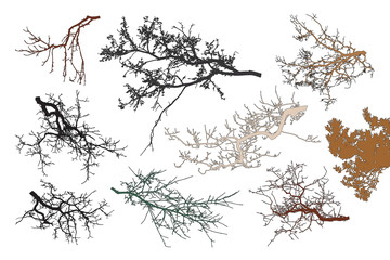 Realistic set of tree branches silhouette (Vector illustration). Different color shades