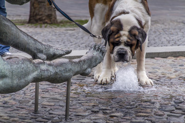 thirsty dog on the street drinking water