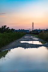 夕方の川辺と水たまり