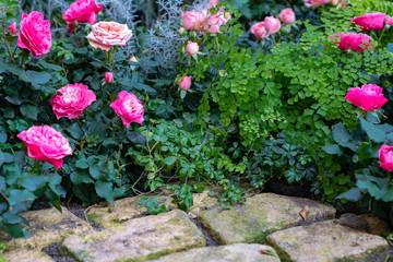 薔薇の咲く庭の片隅