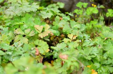 雨上がりのみずみずしい植物