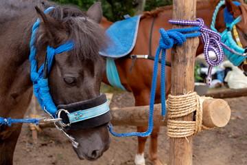 紐で繋がれた馬