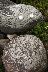 stone with eyes
