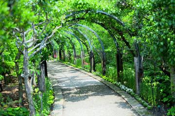 光が差し込む植物のアーチと遊歩道