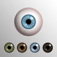 Vector realistic 3d human eyeball with natural colored iris set on light background