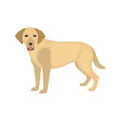 Labrador dog color vector icon. Flat design