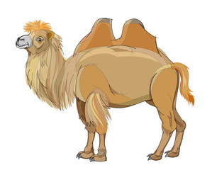 Fantasy illustration of cute Bactrian camel on white background. Hand-drawn vector image.