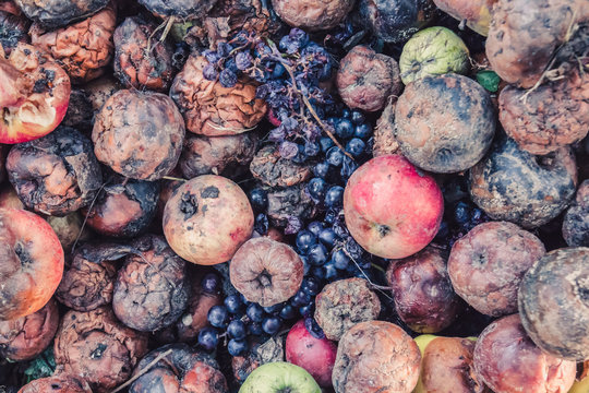 Pile of rotten apples and grapes, the concept of a spoiled harvest