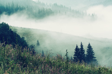 Foggy morning summer landscape, amazing hipster background with fir trees