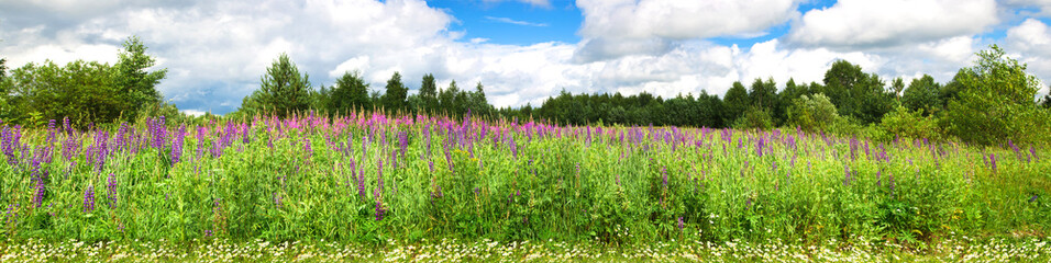 Beautiful panorama with purple wild flowers in a rural location