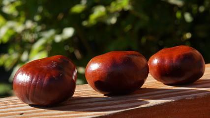 kasztan jesień natura