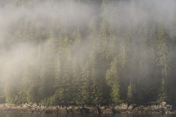 Forest & fog along the Inside Passage;  British Columbia;  Canada