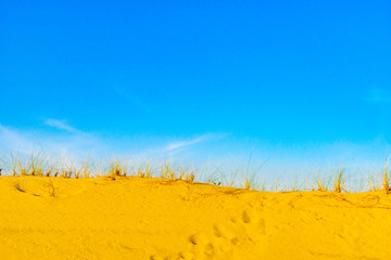 Sand Dunes and Grass of the Provincelands Cape Cod MA US.