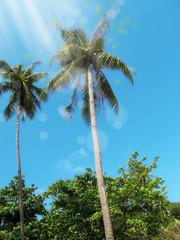 palm trees over clear sunny sky