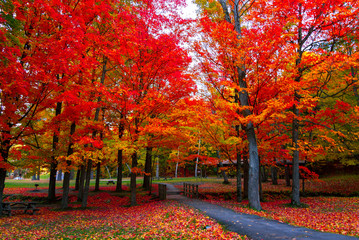 Spoed Fotobehang Rood traf. Beautiful fall foliage in the northeast USA