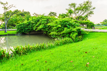 Landscape of forest bridge and canal are city park. This are blue sky time and grass on foreground on picture.