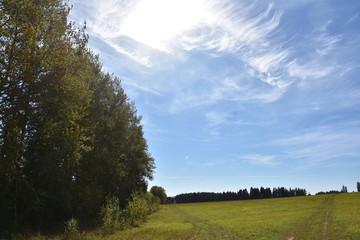 аллея, лето, тополя, сад, деревья, пермский край