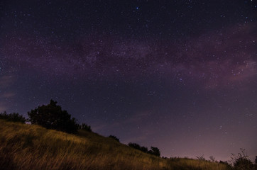 hohes gras und straeucher mit sternenhimmel