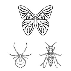 Different kinds of insects outline icons in set collection for design. Insect arthropod vector symbol stock web illustration.