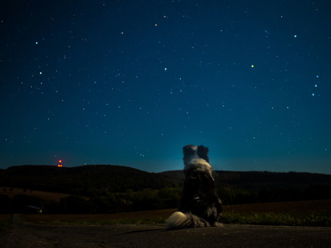 ´dog sitting and watching the stars