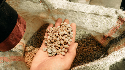 showing high quality raw coffee for export