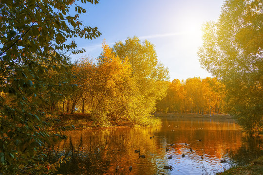 pond in an autumn park landscape by the water in autumn forest, reflections of autumn trees and twigs the water of a cold pond.