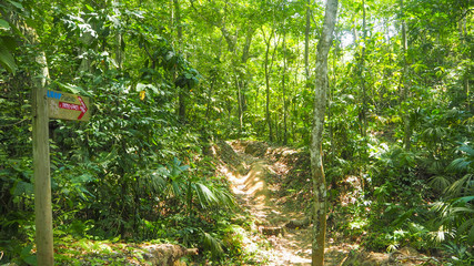 path in a tropical forest in colombia