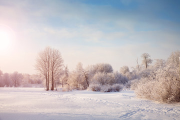 Beautiful trees in winter landscape in early morning in snowfall