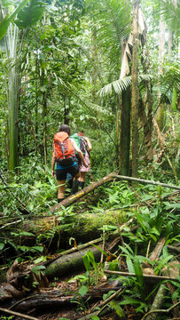 woman walking trough the amazon rainforest