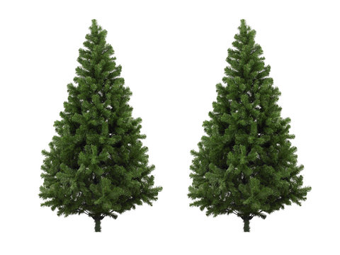 Real Christmas tree, isolated on white background
