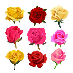 rose vector collection design