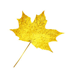 Golden sparkling maple leaf isolated on white Background