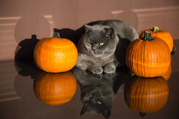 The Cat preparing for Halloween