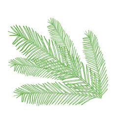 conifers illustration on white. Evergreen plant sketch. Christmas decoration elements