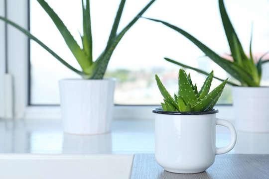 Potted aloe vera in mug and space for text on blurred background