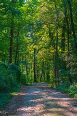Weg im Wald mit