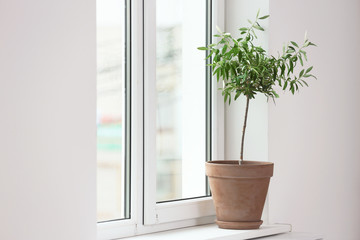Flowerpot with young olive tree on window sill. Space for text