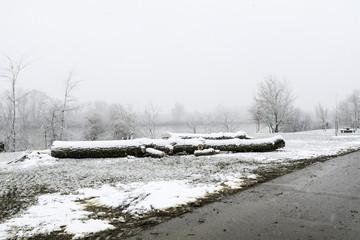 Giboulée de première neige sur arbres au bord de Loire 41220