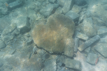 Beautiful underwater stone in the shape of a heart