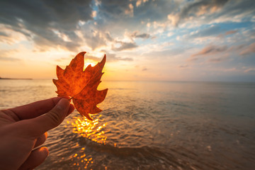 Autumn leaf and sunrise over the sea