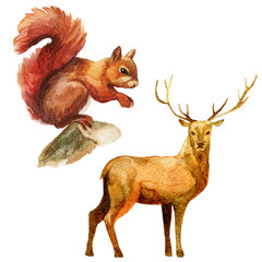 Watercolor illustration, set. Forest animals, squirrel, deer.
