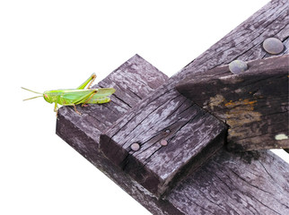 The grasshopper is on a wooden board by cutting out the backdrop.