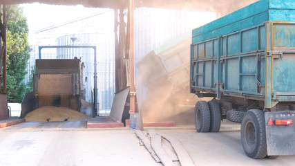 Truck unloading wheat grain in warehouse. Agriculture food factory.