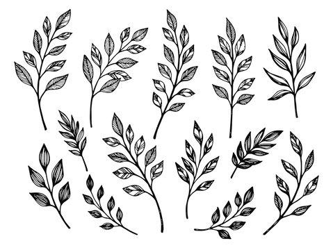 Hand drawn leaves. Botanical vector illustrations