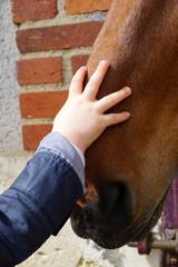 main d'un bébé carressant le museau d'un cheval